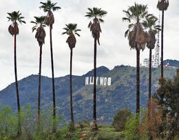 First glimpse of the Hollywood sign through the palm trees - May 2013
