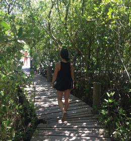 Exploring Isla Contoy, aletrece - October 2016