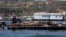 Come face to face with Sea Lions on the San Diego Speed Boat Tour. - July 2011