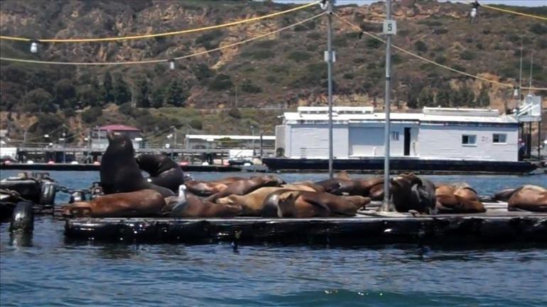 Sea Lions, San Diego - San Diego