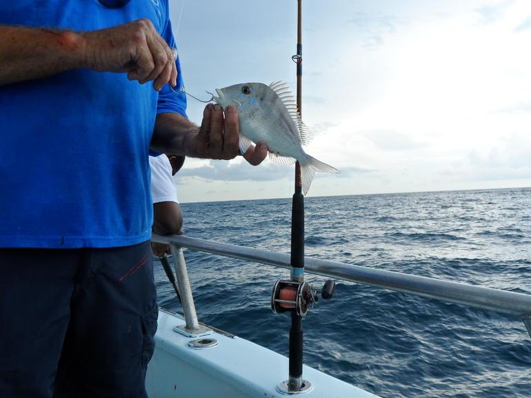 which fish? - Miami