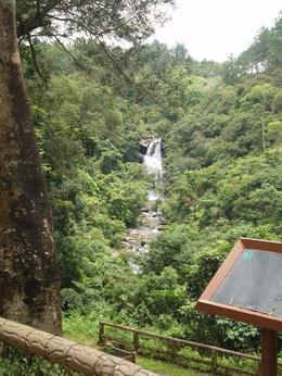 Bride's Pool Falls, Diana F - July 2009