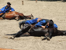 Beautifully trained animals. , John R - July 2012