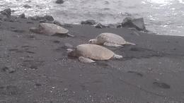 turtles up close , Ora C - June 2013