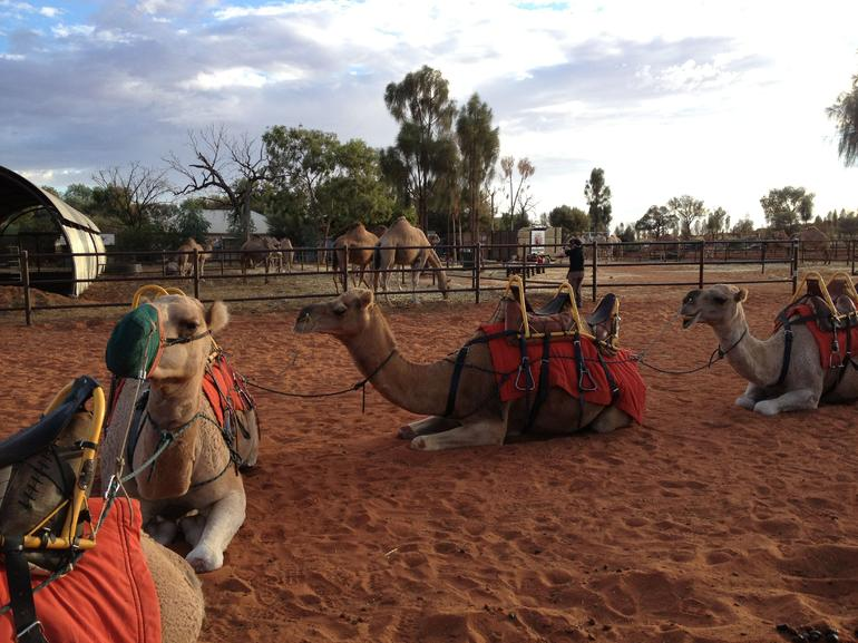 Uluru Camel Express, Sunrise or Sunset Tours photo 28