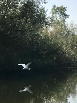 We followed this bird for 10 minutes on our Russian River canoe trip! , Thomas L - September 2017