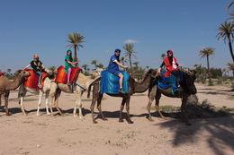 Camel ride , Ante B - June 2016