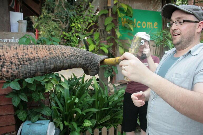 Elephant Feeding - Bangkok