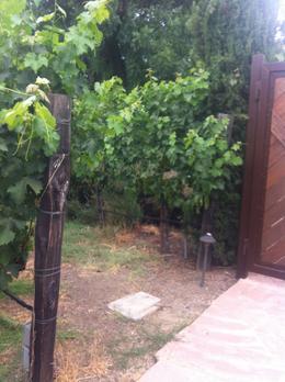 The vines, Kierra - August 2014
