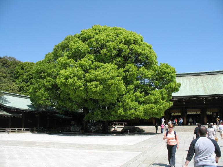 Outside Meiji Shrine - Tokyo