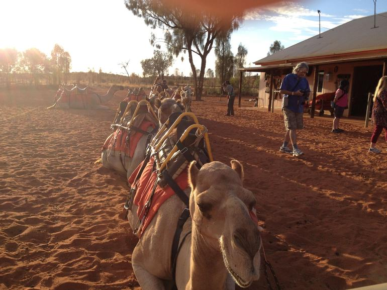 Uluru Camel Express, Sunrise or Sunset Tours photo 26