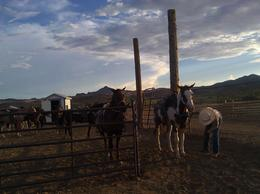 The ranchers getting the horses prepared for their ride, Lovenwar - September 2012