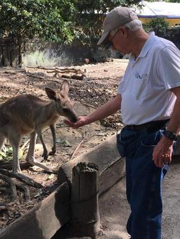 Feeding kangaroo , wwmelton - October 2016