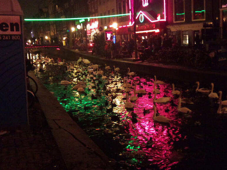Amsterdam is for the birds! -