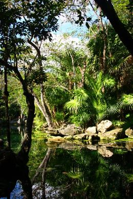 Cenote , Aggie - December 2012