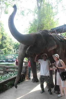 The guides were brilliant and the elephants responded so well to their commands , Rodney H - June 2011