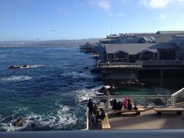 Monterey Bay Aquarium, Cat - December 2013