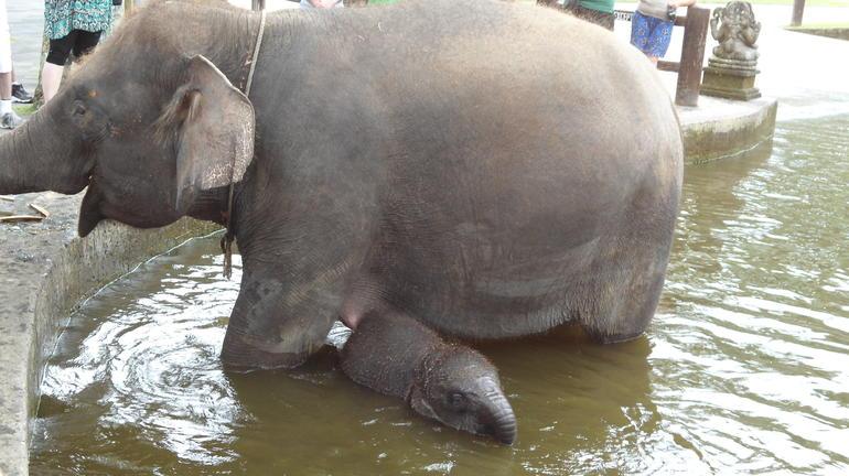Mum and baby at Elephant Safari Park - Bali