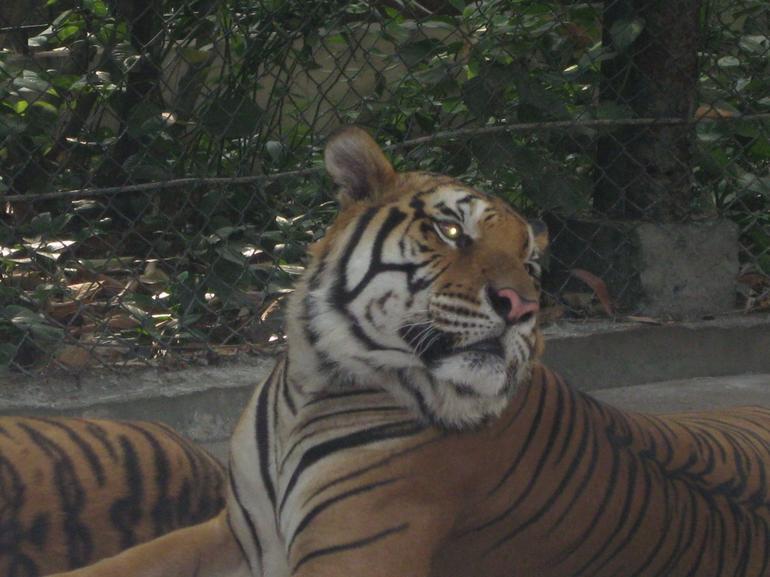 Nice Tiger - Bangkok