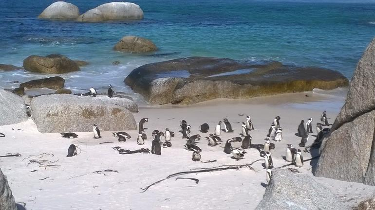 Cape Peninsula Tour from Cape Town photo 25