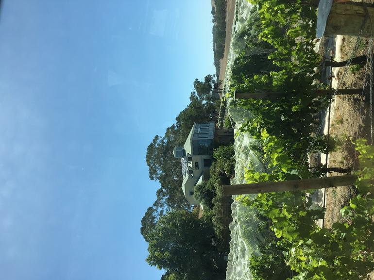 Adelaide Hills and Hahndorf Tour From Adelaide With Wine and Cheese Tasting photo 9