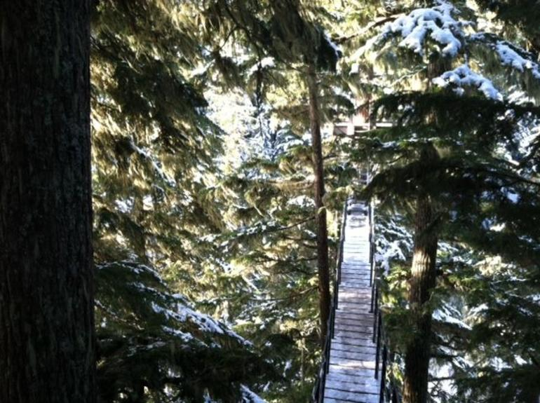 Canopy Walk - Whistler