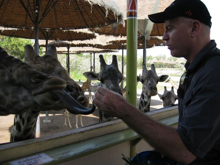 Giraffe Feeding - Bangkok