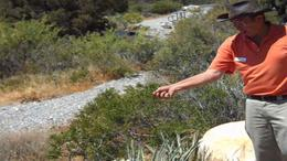 Learn about the Mojave Desert from your expert guide. - July 2011