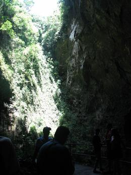 This picture was taken inside the cave. Through out the tour there are areas of vegetation, water, formations and bats. - August 2009