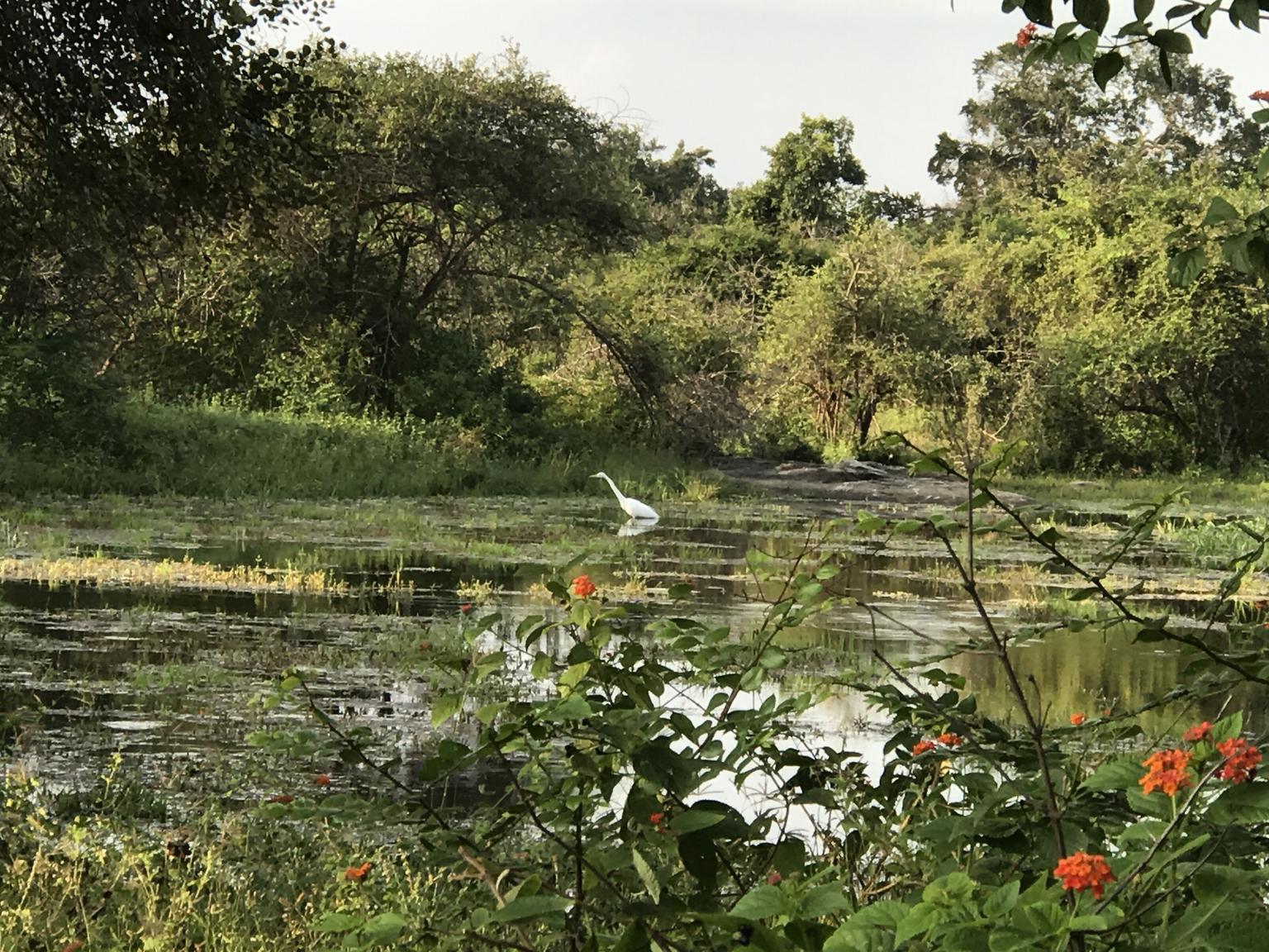 MAIS FOTOS, Yala National Park Private Safari trip from Galle/Unawatuna/Mirissa