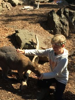 Feeding and petting a wallaby , Stephanie D - September 2015