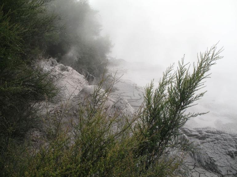 Mud Pools - Rotorua