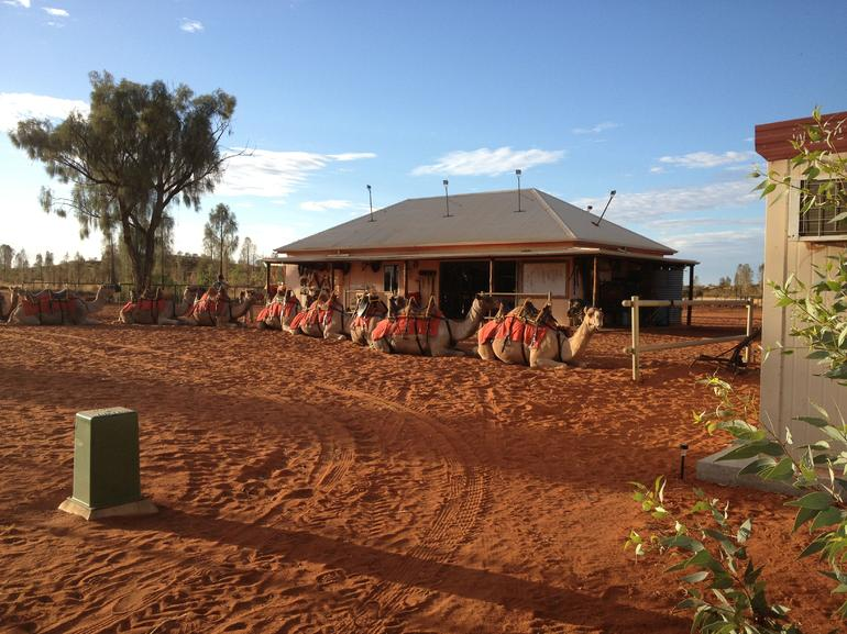 Uluru Camel Express, Sunrise or Sunset Tours photo 23
