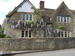 Quint home with hanging wisteria , Nana - May 2017