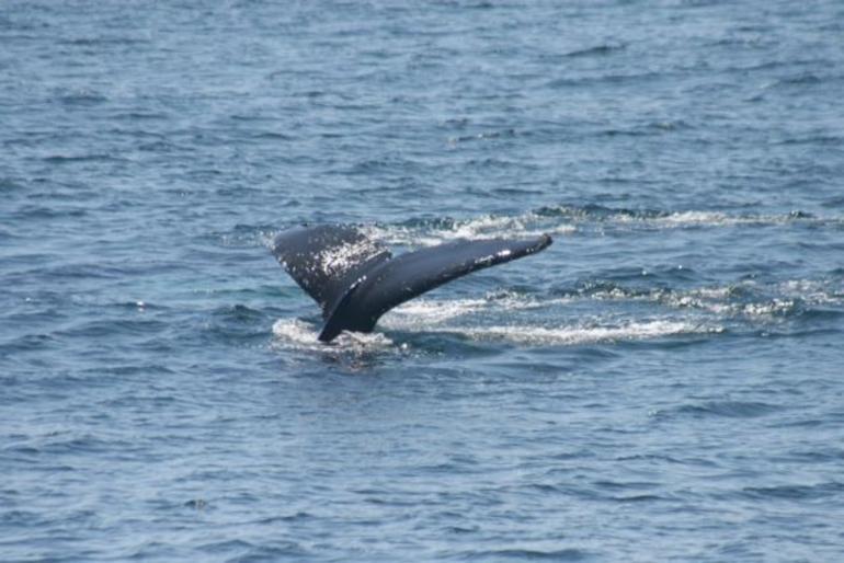Boston Whales - Boston
