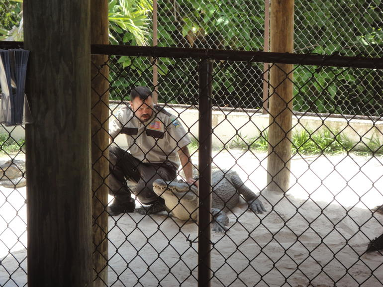 Gator Show - Miami