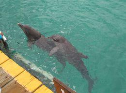 os Golfinhos , Márcio André L - August 2015