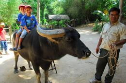 The boys on the water buffalo., Jeff - May 2008