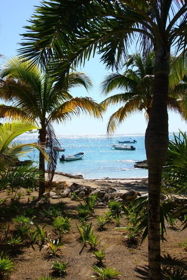 Turtle - Cancun