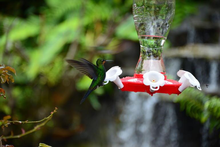 oiseaux-costa-rica-nature