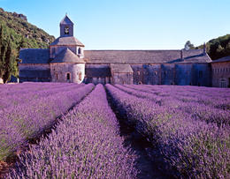 This is an image of a lavender cultivated field just close to the medieval Abbey of Senanque in Provence. - May 2011
