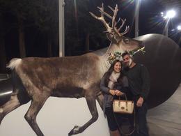 Visiting the reindeer outside, Cat - December 2013