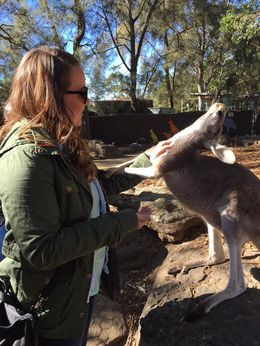 Haha, one of my favorite photos of the trip - This little kangaroo was loving life this day! 3! , Trina B - June 2016