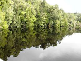 Reflections of the rain forest in the Gordon River at Heritage Landing, Alexandra R - August 2010