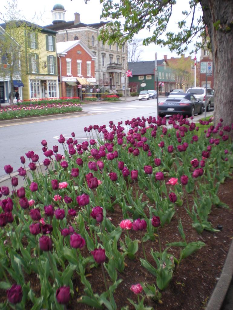 Tulips - Toronto
