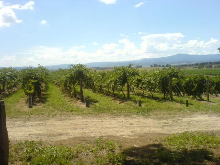 Yering Farm Vines - Melbourne