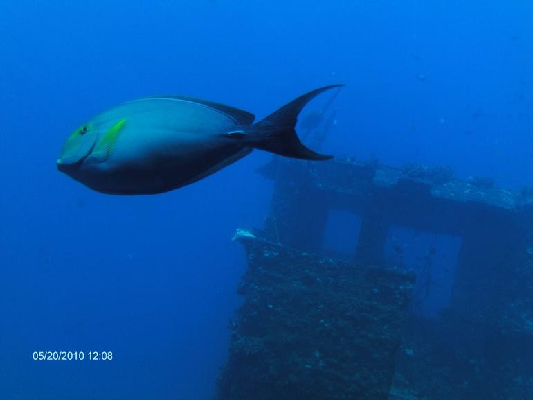 Atlantis Kona Submarine Adventure