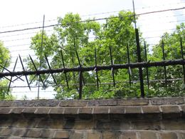Old-school, original, barbed wire and electric fence.....they say to keep William and Harry in., Corrie R - September 2009