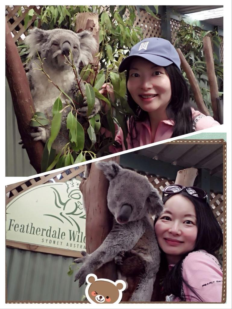 Featherdale Park - encounter with Koala - Sydney