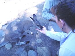 We were able to feed and pet several animals on our Wild Australia Experience tour. - May 2009